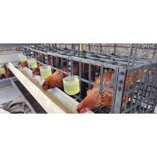 Kandang Batere Ayam Petelur